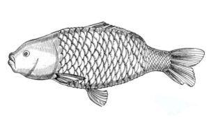 Żółty Słoń Ryby i owoce morza