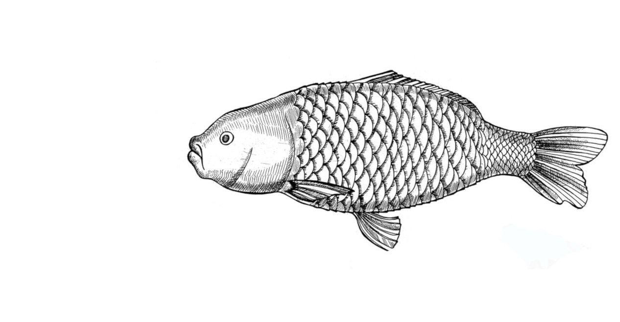 Żółty Słoń Ryby